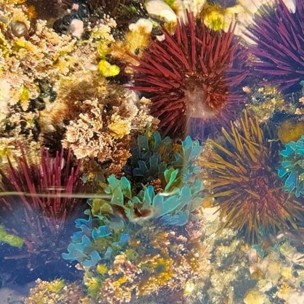 Ecologia entre marés - Módulo I